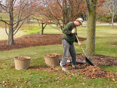 Simplifying Your Garden