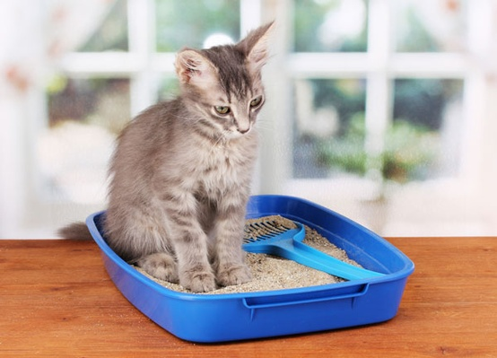 cat litter uses